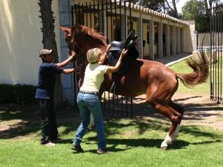 HorseBadly2